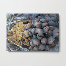 New and Old Mushroom Growth Metal Print