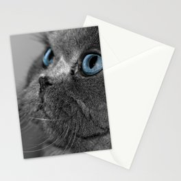 Grey Persian Cat with Blue Eyes Stationery Cards