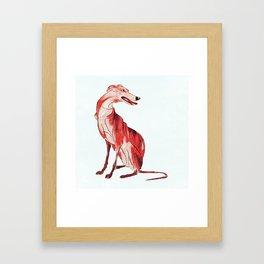 Whippet 1 Framed Art Print