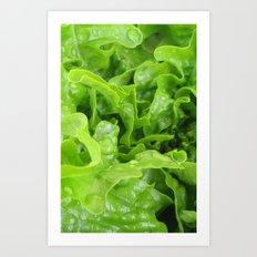 Lettuce Art Print