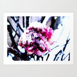 Frozen Rose Art Print