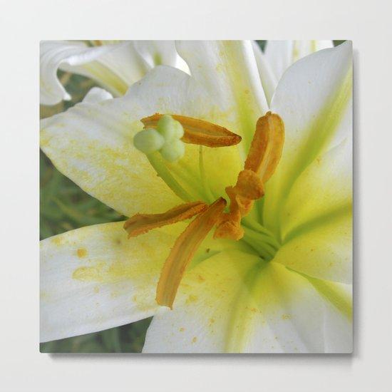 lily macro XIV Metal Print