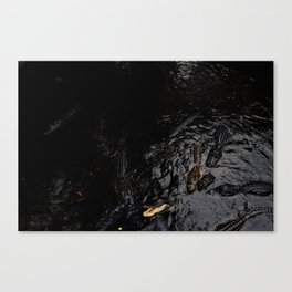 alligators.1 Canvas Print