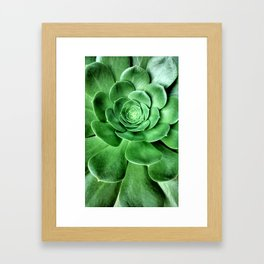 Aeonium Framed Art Print