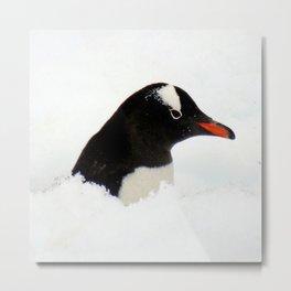 Gentoo Penguin Head Metal Print