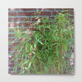 Garden Bamboo Plant Metal Print