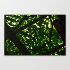 Green Oasis Canvas Print