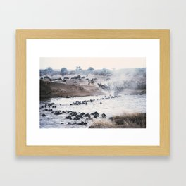 Ñu migration Framed Art Print