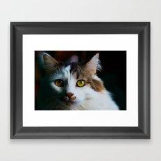 Kootie Framed Art Print