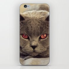 Superstar Diesel the Cat ! iPhone & iPod Skin