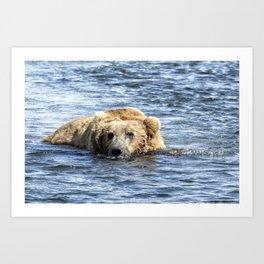 Brown Bear Cooling Off Art Print