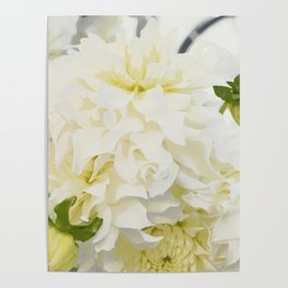 Cream Peonies | Flowers | Flower | Florals | Nadia Bonello | Canada Poster