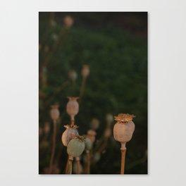'Tealit' Garden Party Canvas Print