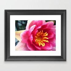 Pink WaterLily II Framed Art Print