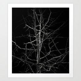 Dark Tree. Black and White. Art Print