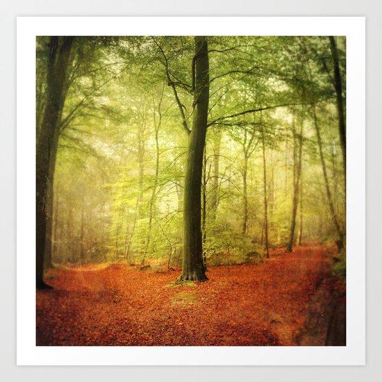 Beech tree forest glow Art Print