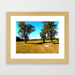 Fall in Florida  Framed Art Print