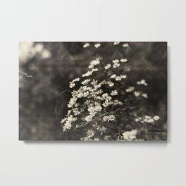 Daisies - sepia Metal Print