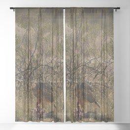 6337 - Red-Tailed Hawk Feeding Sheer Curtain