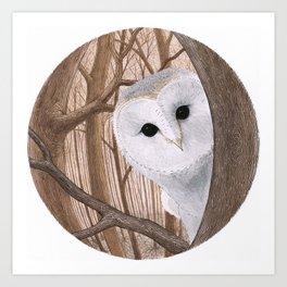 curious owl Art Print
