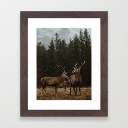 Deer. Scottish Highlands. Framed Art Print