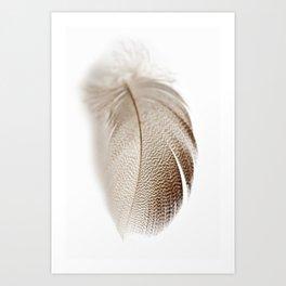 Mallard Feather Art Print