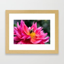 The Bee and the Flower Framed Art Print