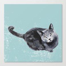 russian blue cat Canvas Print