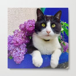 Orazio charming cat in the blue Metal Print