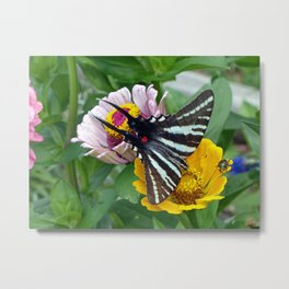 Zebra Swallowtail Butterfly Metal Print