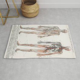 The Human Blood Vessels 1898 Rug