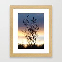 Creosote Bush at Sunset Framed Art Print
