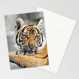 Tiger_20141002_by_JAMFoto Stationery Cards