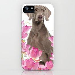 Weimaraner Lotos Flowers iPhone Case