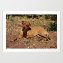 """""""Born Free"""" from the photo series, """"My dog, PLaY-DoH"""" Art Print"""