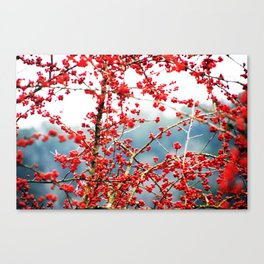 Hawthorn Tree Canvas Print