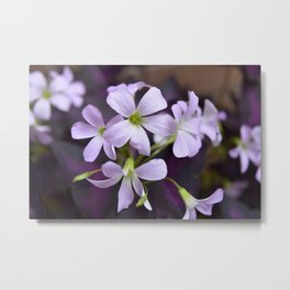Flower | Flowers | Delicate Lavender Petals | Small Purple Flowers | Metal Print