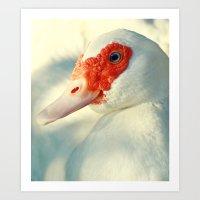 duck Art Prints featuring Duck by Falko Follert Art-FF77