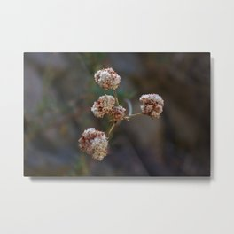Growing Out Of Nowhere Metal Print