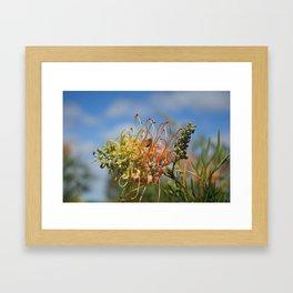 Australian flower and  bee Framed Art Print