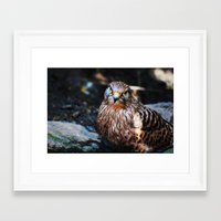falcon Framed Art Prints featuring Falcon by Amee Cherie Piek