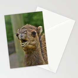 Mouthy Camel Stationery Cards