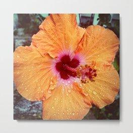 Orange Lagos Hibiscus Metal Print