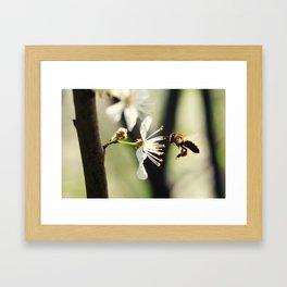 Spring messenger Framed Art Print