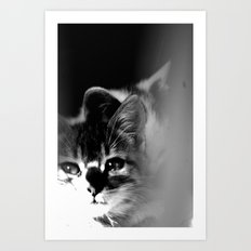 Bliss Kitten 3 Art Print