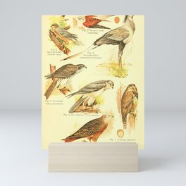 William Playne Pycraft - A Book of Birds (1908) - Plate 7: Hawks, Kestrels, Buzzards etc Mini Art Print