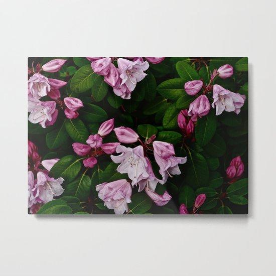 Spring Pink Rhododendron Metal Print