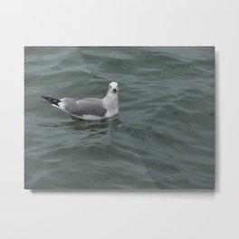 Seagull In The Ocean Metal Print