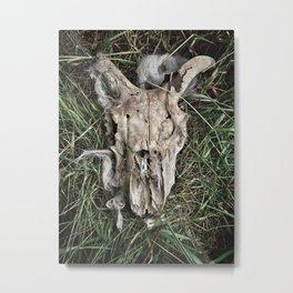 Sheep Skull Metal Print