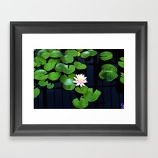 Lily pads and flower Framed Art Print